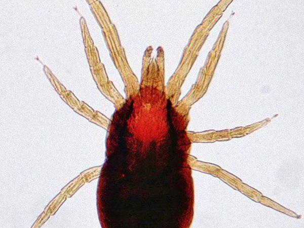 mite control pest control services